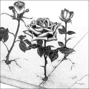 concrete rose_edit